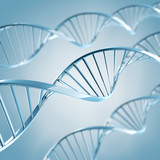 DNA Moleküle