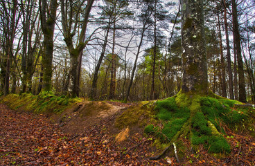 Paimpont forest, France