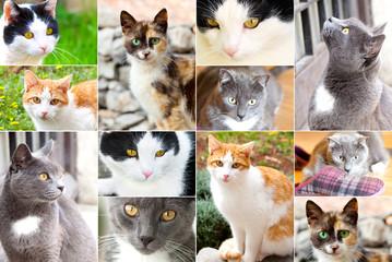 assortment of cats