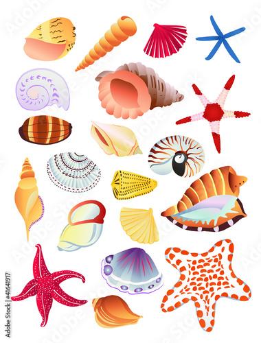 贝壳海星简笔画剪纸
