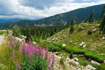 Colorado Mountain Landscape