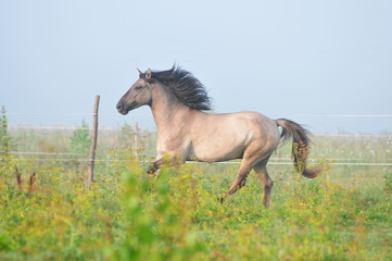 horse in the morning fog
