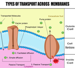 Types of transport across membranes