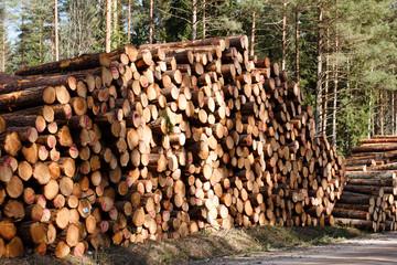 freshly sawn logs