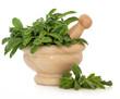 Variegated Sage Herb