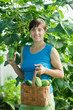 woman with harvested cucumber