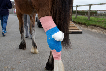 Bandaged horse leg