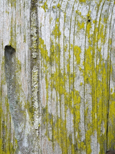 Grunge Style Vertical Wood surface with Yellow fungus