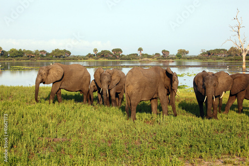 Elephants by the Lake
