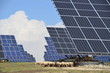 Solar power plant with grazing sheep