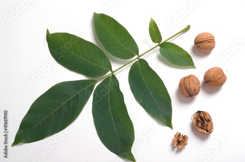 Walnuts & leaf