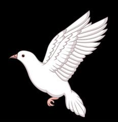 White Dove Flying