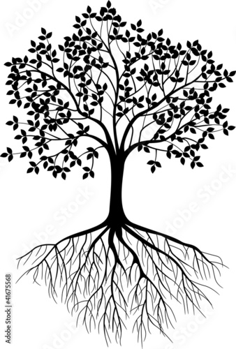 Tree silhouette background - 41675568