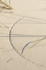 Arc in sand scribed by wind-blown Marram Grass.