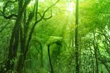 Fototapety Mossy forest
