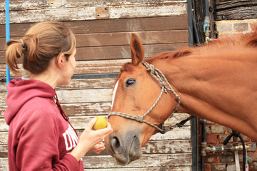 Beautiful women give an apple to her horse