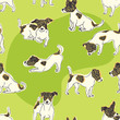 Jack Russell Terrier background