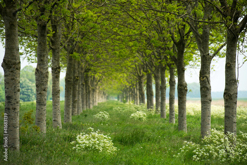 Two rows of trees in spring