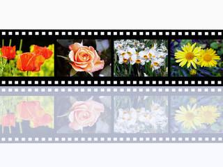 Blumen Impressionen