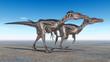 Velociraptoren