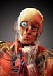 anatomy concept