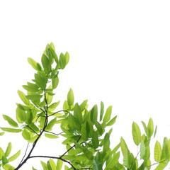 spring nature green leaf