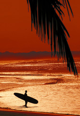 Surfer in tropical destination