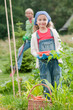 Vegetable garden - lovely girl helping in the garden