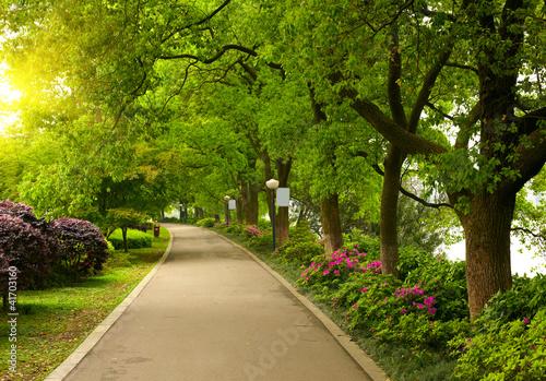 Leinwanddruck Bild Summer park road