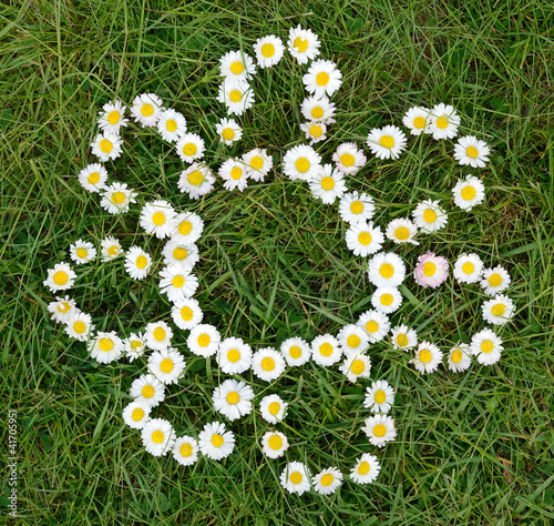 Daisy flowers shape composition on spring field