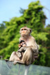 Monkey (Long-Tailed Macaque) with her sweet baby.