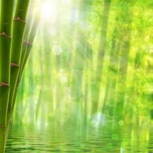 Forêt de bambous. Milieux d'été abstraites avec le soleil lumineux et b