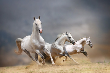 white horses © Mari_art