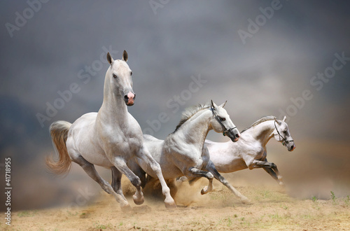 fototapeta na ścianę white horses