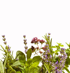 Herbs against white background