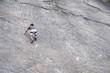 Climber climbing near Valle di Sarca / Arco (Italy)