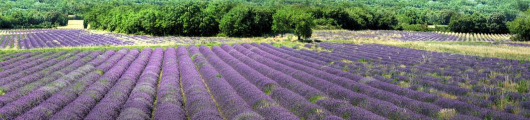 Provence - Champs de Lavandes