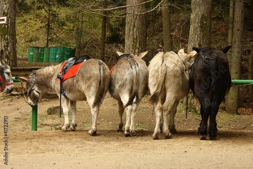 donkey taxi