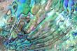 Leinwandbild Motiv Haliotis shell detail