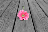 Flower laying on Wood
