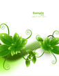 abstract nature leaf eco ecology shiny wave vector
