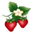 Strawberries illustration, isolated on white.