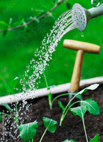 Watering young seedlings
