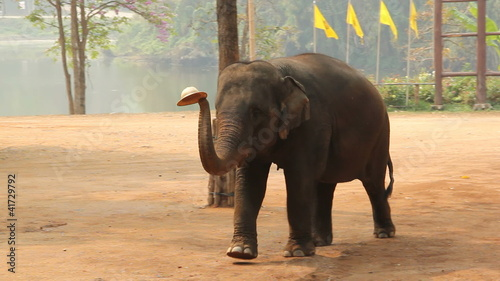 elephants show in Lampang, Thailand.