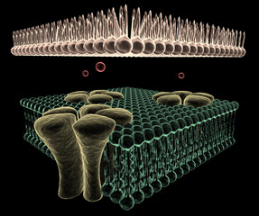 Ion Channels of a Cell