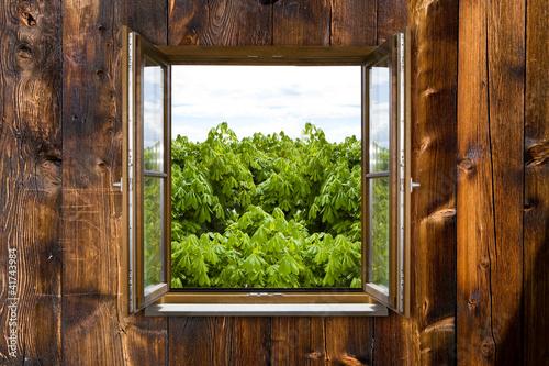 Hüttenfenster - 41743984