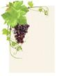 page de vigne