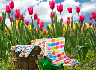 tools in tulip garden