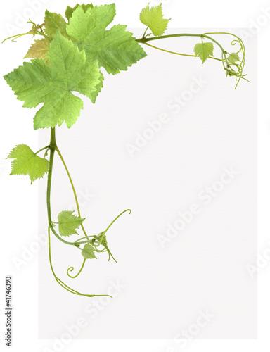 page de feuilles de vigne
