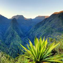 "Aloes vert dit ""choca"" devant Mafate, La Réunion."